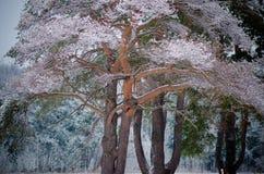 La neige a couvert des branches d'arbre d'hiver Images stock