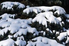 La neige a couvert des branches d'un arbre impeccable en hiver Images stock