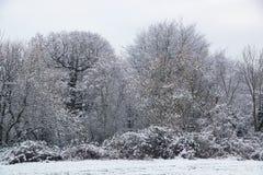 La neige a couvert des branches et des arbres Photos libres de droits