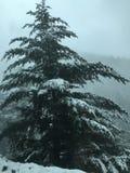 la neige a couvert des branchs photo libre de droits
