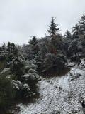 la neige a couvert des branchs photos libres de droits