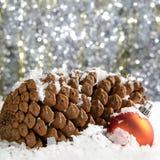 La neige a couvert des cônes de pin Photo libre de droits