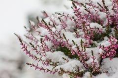 La neige a couvert des fleurs Photo libre de droits