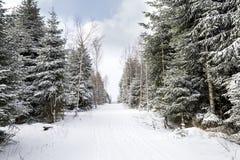 La neige a couvert des pinetrees de chemin au milieu Photo stock