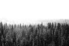 La neige a couvert des pins après tempête images libres de droits