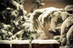 La neige a couvert des plantes vertes Images stock