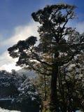 La neige a couvert l'arbre Images libres de droits