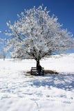 La neige a couvert l'arbre Photo stock