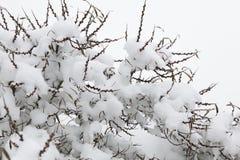 La neige a couvert l'arbre Image stock
