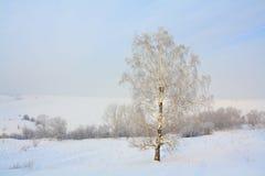 La neige a couvert l'arbre Photo libre de droits