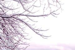 La neige a couvert l'arbre Photographie stock