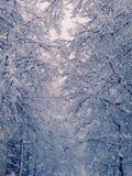 La neige a couvert l'arbre Image libre de droits