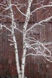 La neige a couvert l'arbre de bouleau et une grange rouge. Image stock