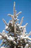 La neige a couvert l'arbre de pin Photographie stock