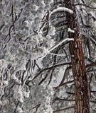 La neige a couvert l'arbre de sapin Images libres de droits