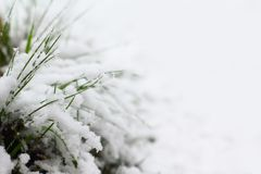 La neige a couvert l'herbe Images stock