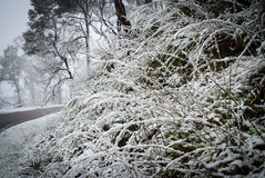 La neige a couvert l'herbe Photographie stock