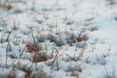 La neige a couvert l'herbe congelée 2 photographie stock
