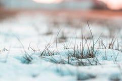 La neige a couvert l'herbe congelée de fond brouillé images libres de droits