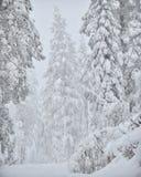 La neige a couvert l'hiver de forêt Image libre de droits