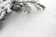 La neige a couvert la branche images stock