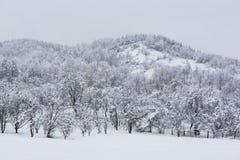 La neige a couvert la colline Photo libre de droits