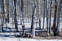 La neige a couvert la forêt Image libre de droits
