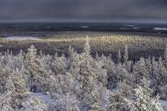 La neige a couvert la forêt Photos libres de droits
