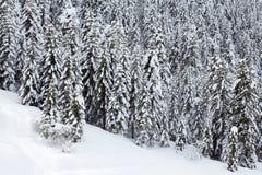 La neige a couvert la forêt d'arbres de pin Image stock