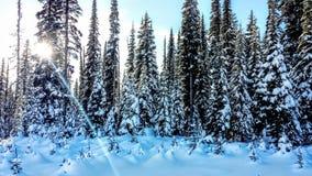 La neige a couvert la forêt de lever de soleil à l'arrière-plan Image libre de droits