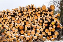 La neige a couvert la pile fraîche d'arbres de coupe à l'hiver Photo libre de droits