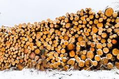 La neige a couvert la pile fraîche de bois de chauffage de coupe à l'hiver Photographie stock libre de droits
