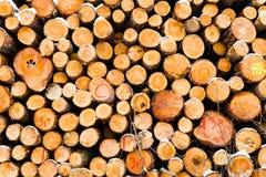 La neige a couvert la pile fraîche de bois de chauffage de coupe à l'hiver Photo stock