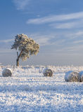 La neige a couvert la prairie de fauche et le pin Image stock