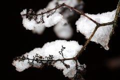 La neige a couvert le branchement Images stock