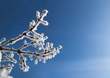 La neige a couvert le branchement Images libres de droits
