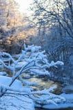 La neige a couvert le branchement Photos stock