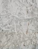 La neige a couvert le branchement d'arbre Images stock