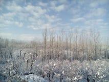 La neige a couvert le Cachemire Photos libres de droits