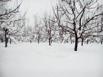 La neige a couvert le Cachemire Image libre de droits
