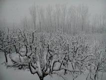La neige a couvert le Cachemire Images libres de droits
