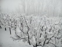 La neige a couvert le Cachemire Photo stock