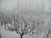 La neige a couvert le Cachemire Photo libre de droits