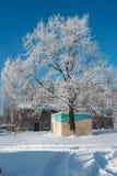 La neige a couvert le chêne Photo stock