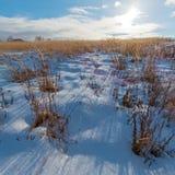 La neige a couvert le champ et le Sun Images libres de droits