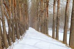 La neige a couvert le chemin Photo libre de droits