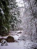 La neige a couvert le chemin d'arbres Images libres de droits
