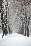 La neige a couvert le chemin de l'hiver sous des arbres Photographie stock