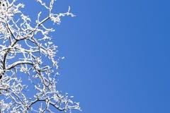 La neige a couvert le ciel bleu de branchements Image libre de droits