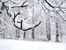 La neige a couvert le fond de branchement Photos stock